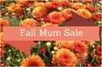 OMS Mum Sale