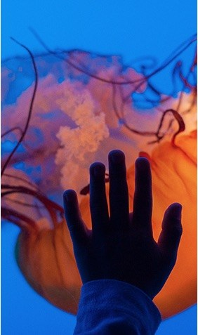 image of hand on glass of giant orange jelly fish