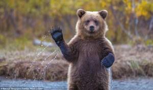 bear wave 2.jpg