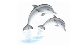dolphin-jumping recess.jpg