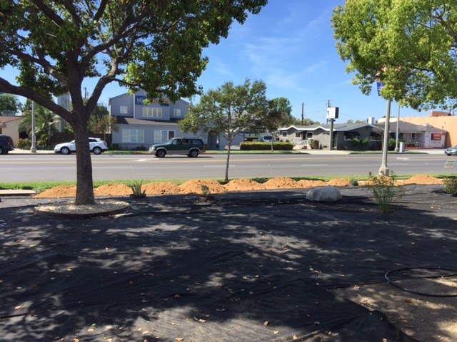 New plants in front of the district office