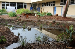 Biofilters water run-off in the SGHS garden