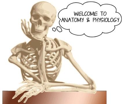 Anatomy & Physiology – Gretchen Bass – Willis High School