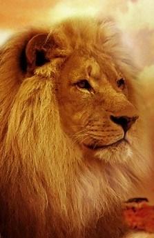 lion-577104_960_720.jpg