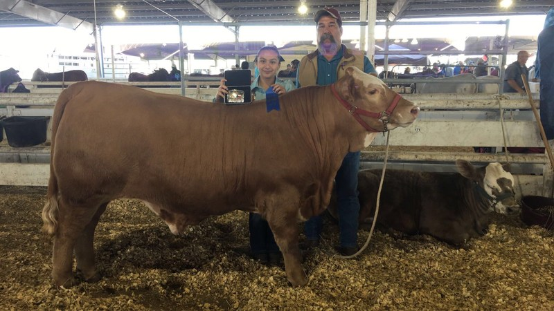 VVJH Student wins at Livestock Show in Mercedes TX Thumbnail Image