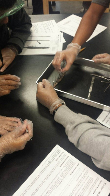 Mr. Martinez's Biology Classes-Earthworm Dissection Featured Photo