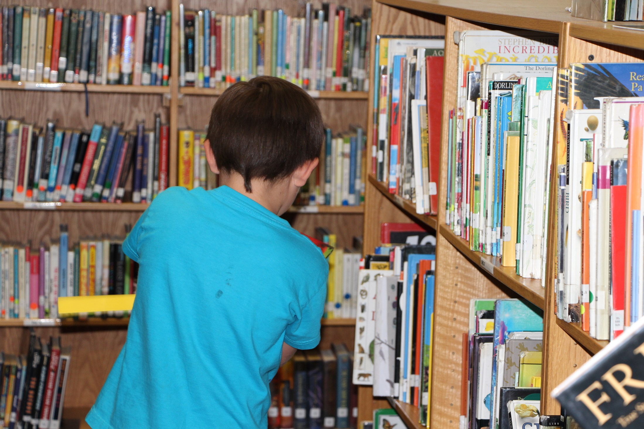 Child selecting a book from library.
