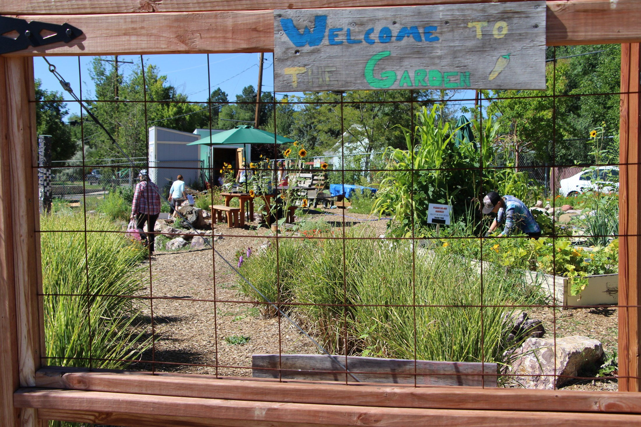 Needham school and community garden.