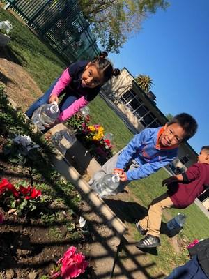 Kindergartener admiring flowers