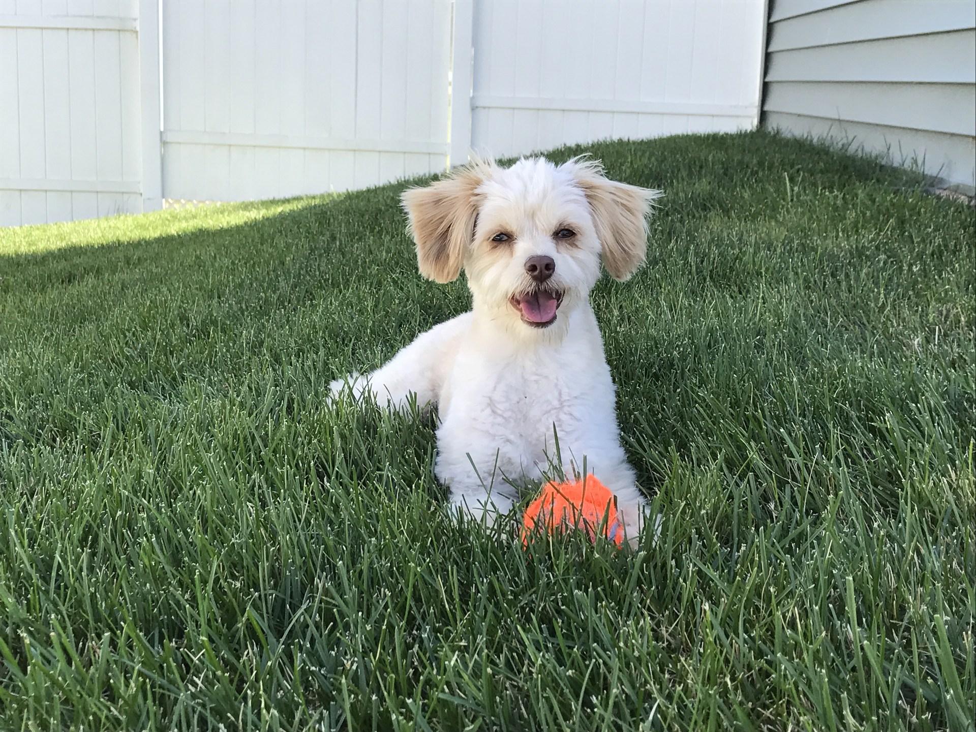 Meet Ollie! He is a true teacher's pet ;)