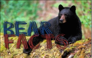 Bear Facts Logo
