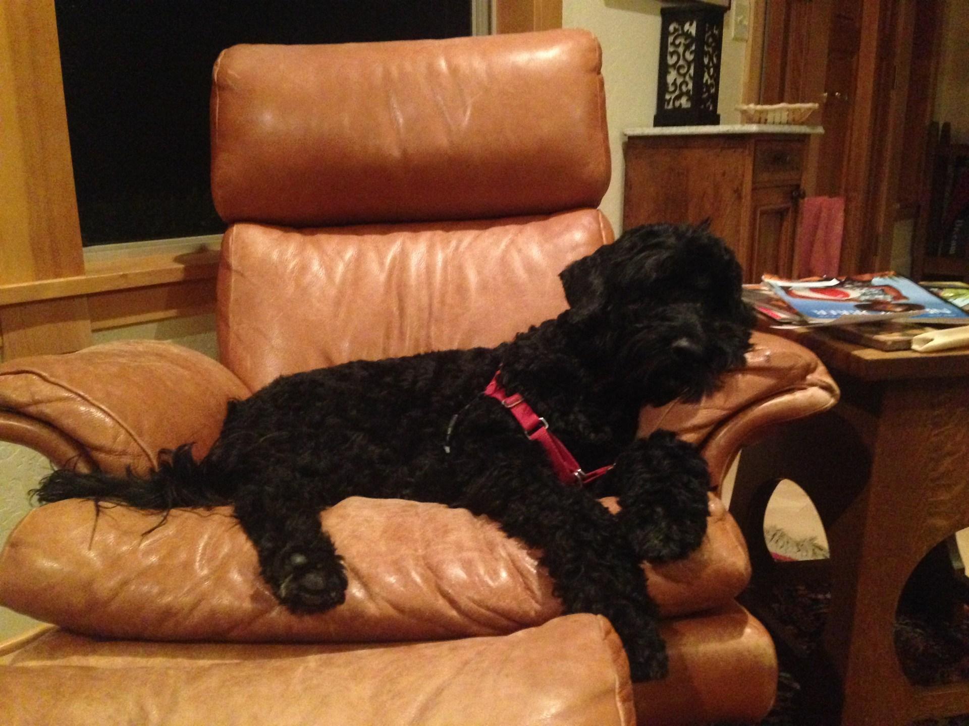 Image of sleeping dog