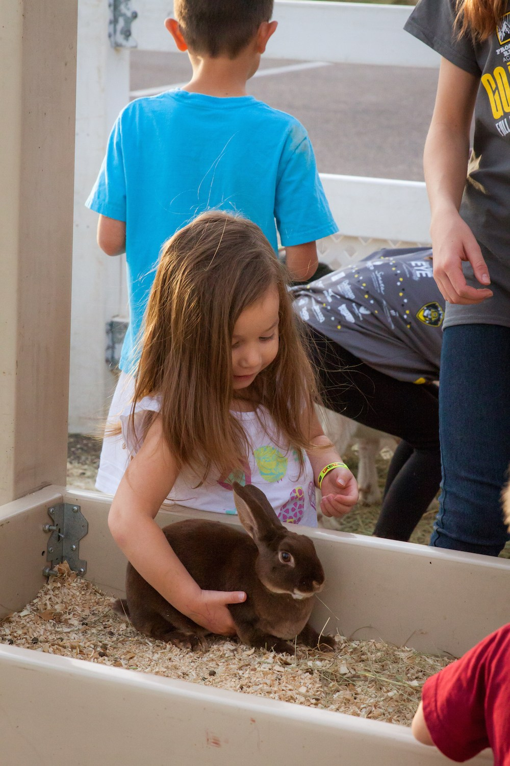 Kid petting bunny