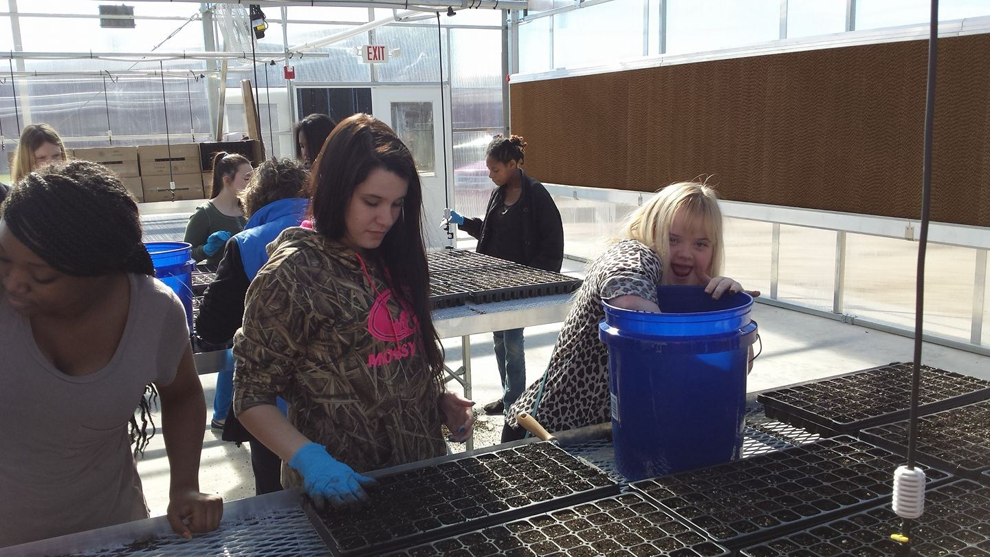 Students working in the greenhouse