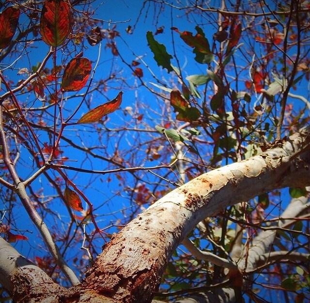 Sky through a tree