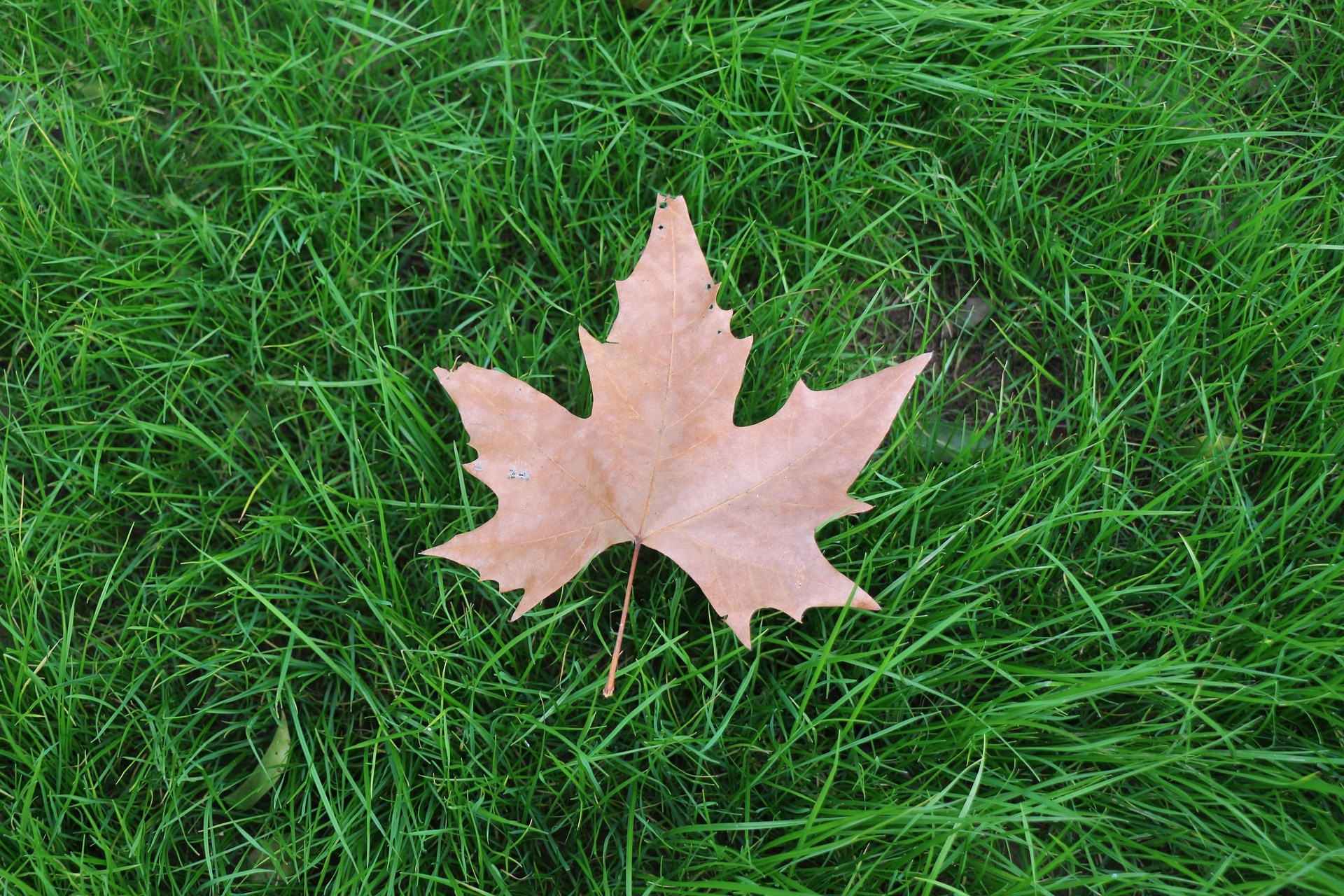 Grass and leaf picture