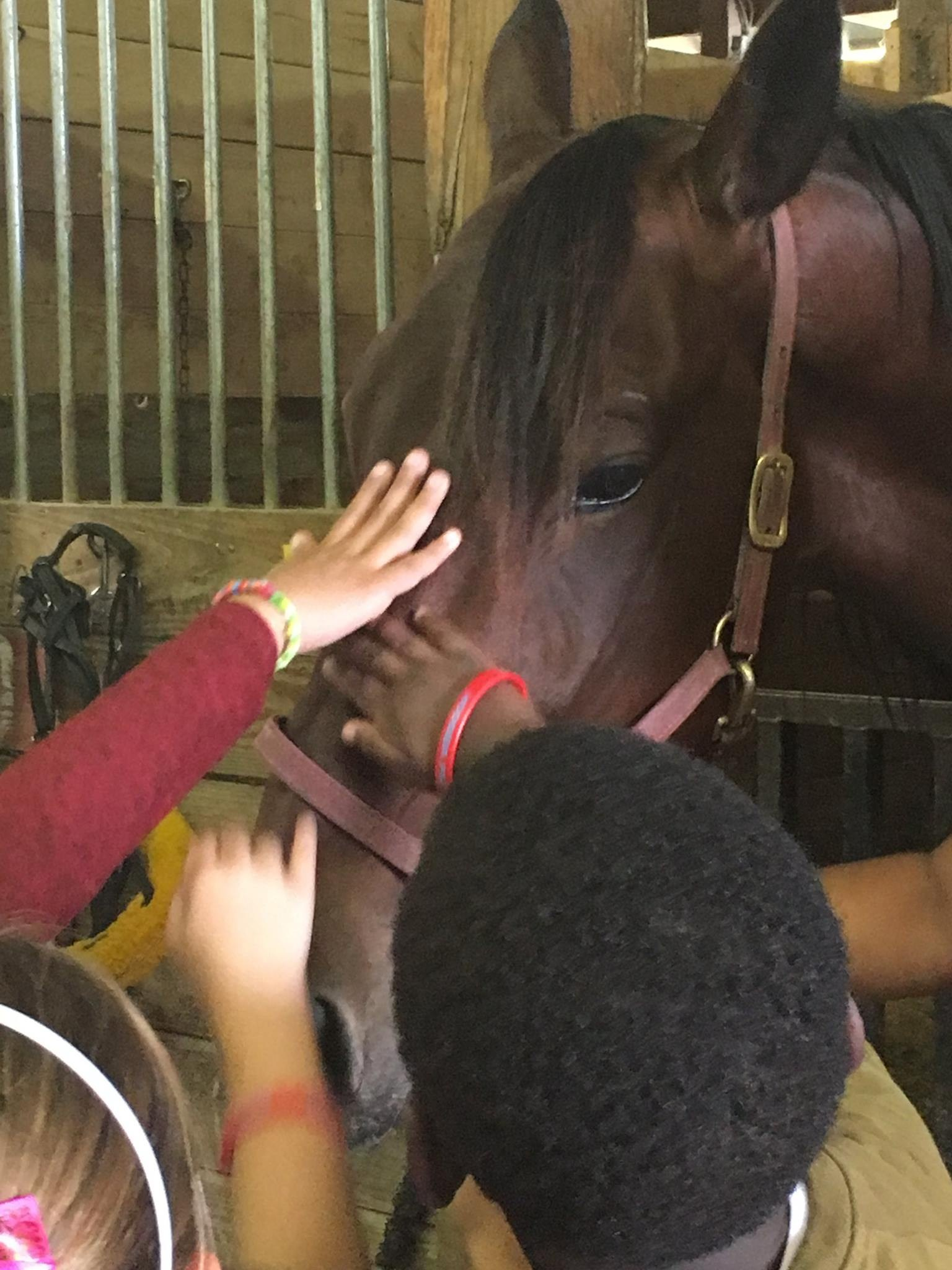 Students seeing the horses at Hoosier Park
