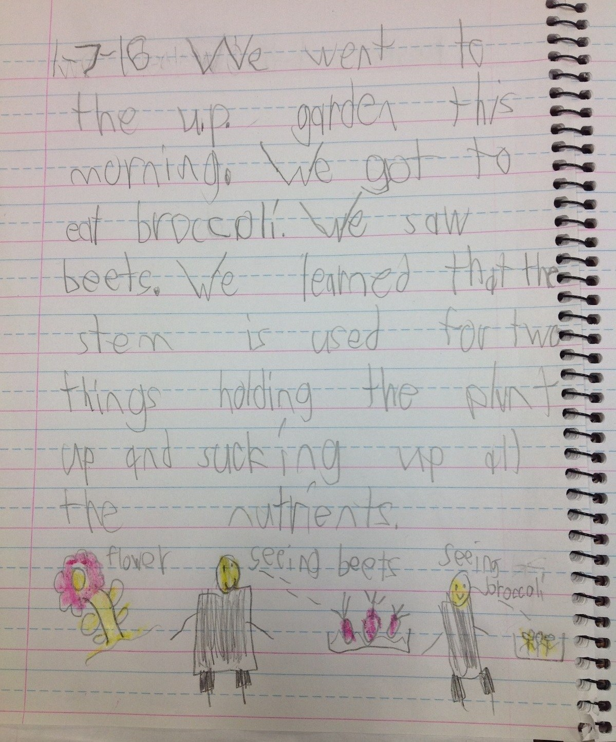 Student Garden Stories