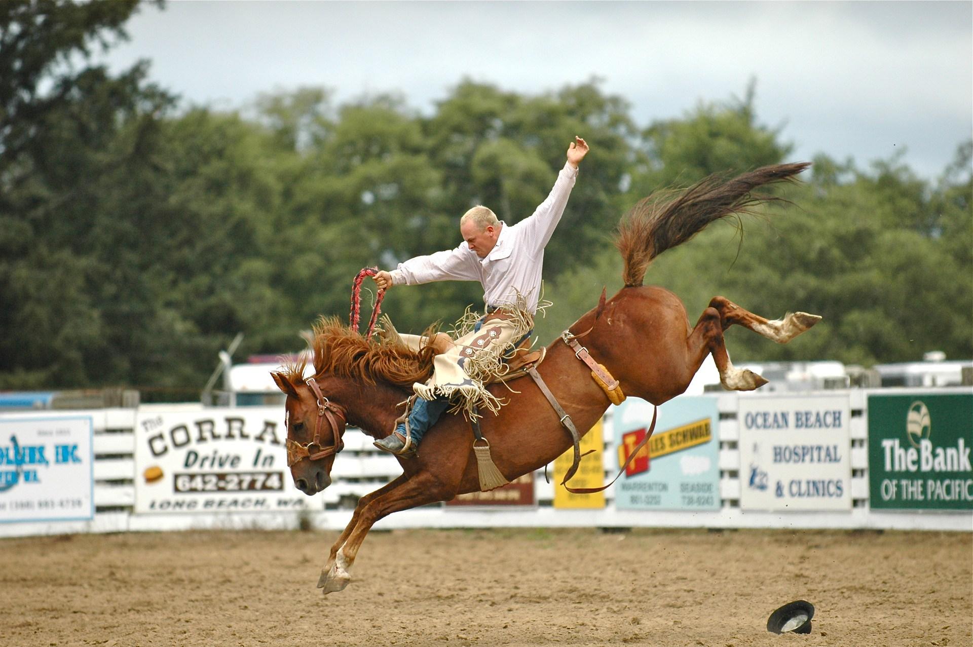 Cowboy riding a bucking bronc, Long Beach Rodeo.