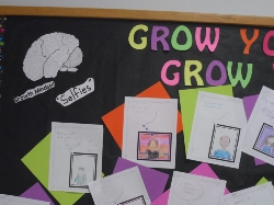 Brain on Bulletin Board with Mind Grow Set Pictures