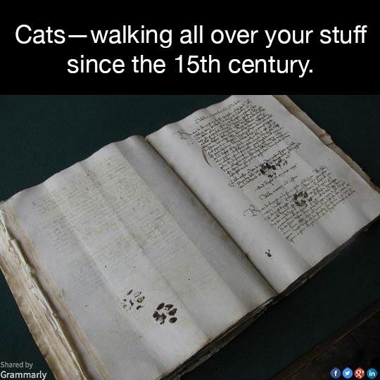Cats: Walking all over our stuff since the 15th century