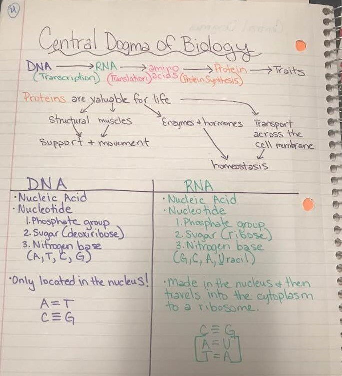 Unit 8 Molecular Genetics Cameo Basaldua Victoria West High School