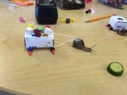 snail chariot.JPG