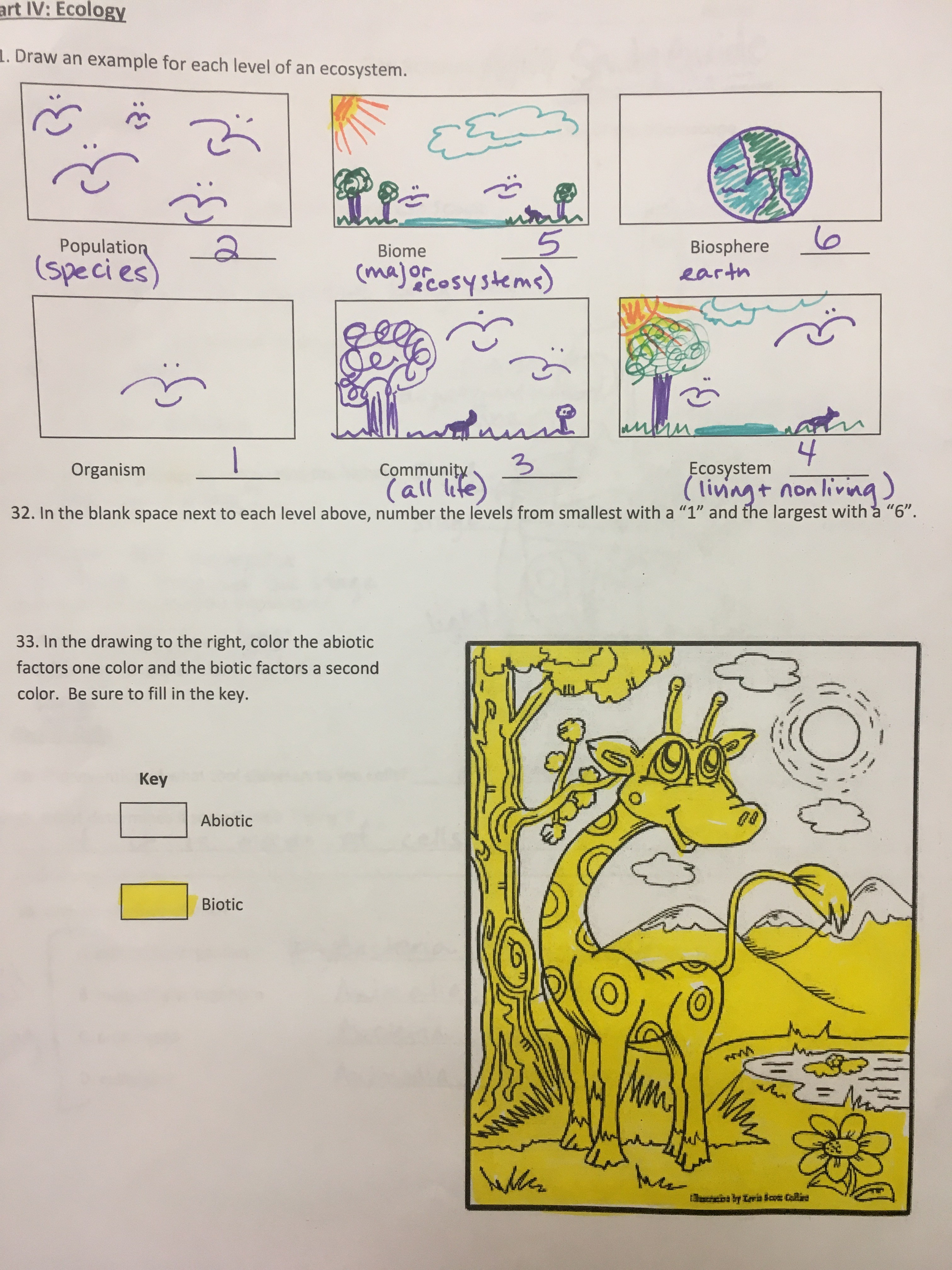 essays on biomes One of the most fascinating biomes on planet earth is the tropical rainforest it is  filled with tall trees, interesting plants, giant insects, and all sorts of animals.