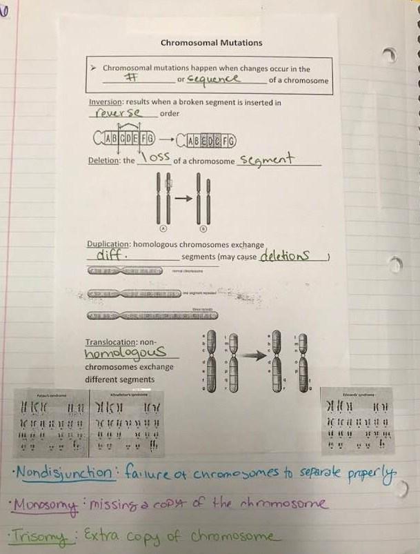 Unit 9 Mendelian Non Mendelian Genetics Meiosis Cameo Taylor