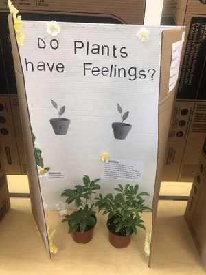 Student Science Fair project: Do Plants Have Feelings?