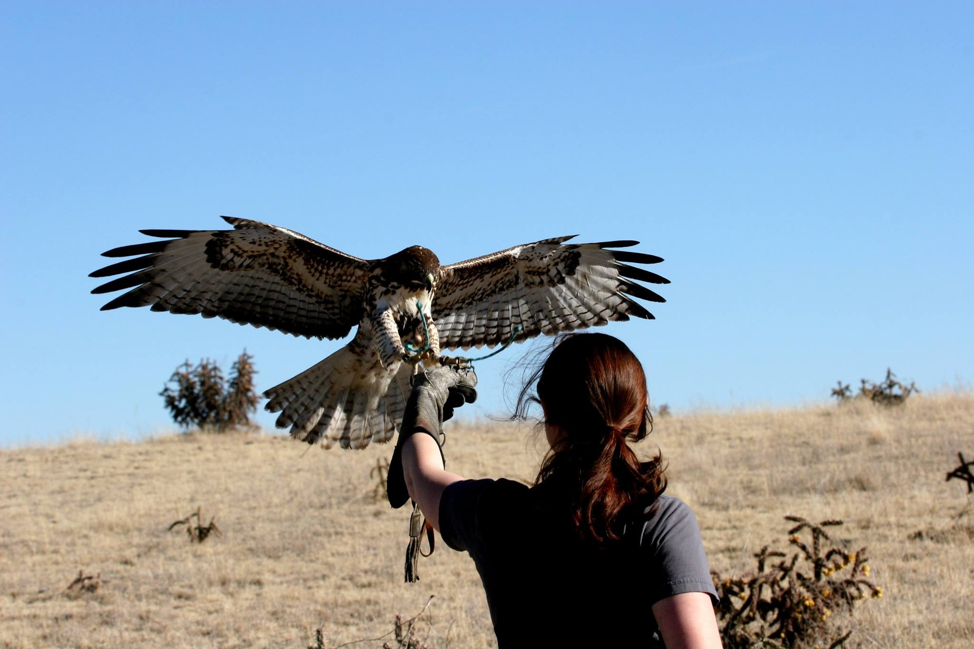 Me and my red-tailed hawk, Hudson.