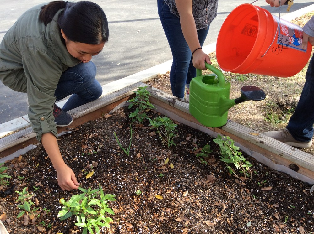 Advisory students working on garden