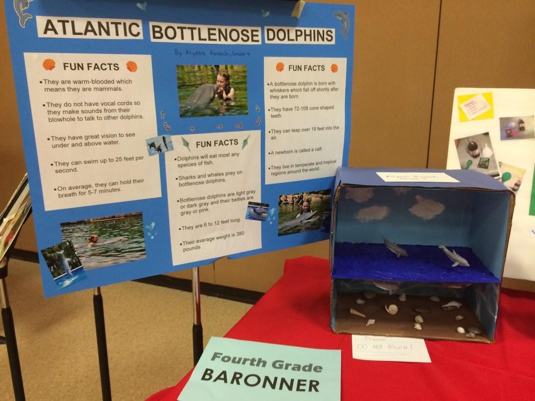 Atlantic Dolphin Science Board- Student designed