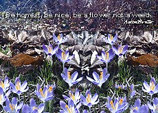 "ThrowbackThursday - Field of Crocus with the words ""Be Honest, Be Nice, Be a flower not a weed"""