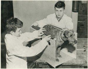 Two boys in lab coats measuring a dog.