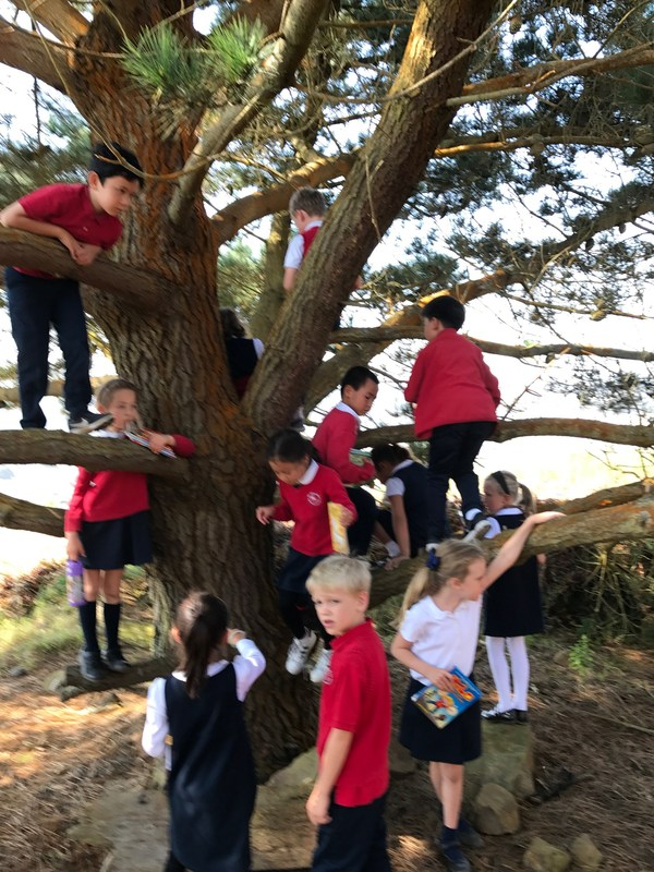 Second grade's hard work earned them a reading party at the big tree on Reservoir Hill! Thumbnail Image