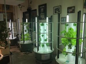 hydroponics lab 1